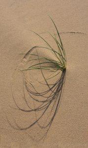 Petra van Went - Sandwrighting II
